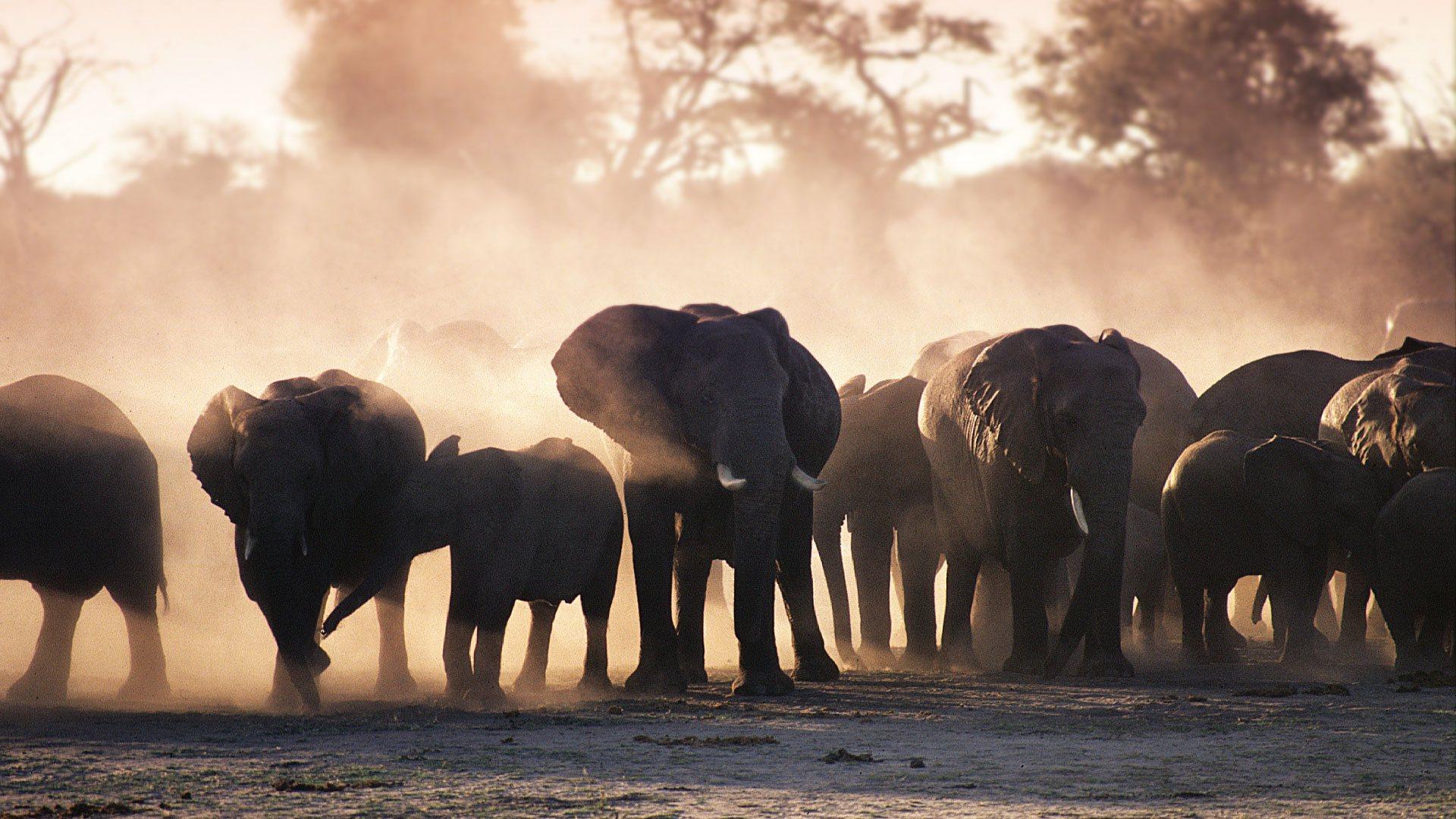 Victoria Falls Hotel Elephant