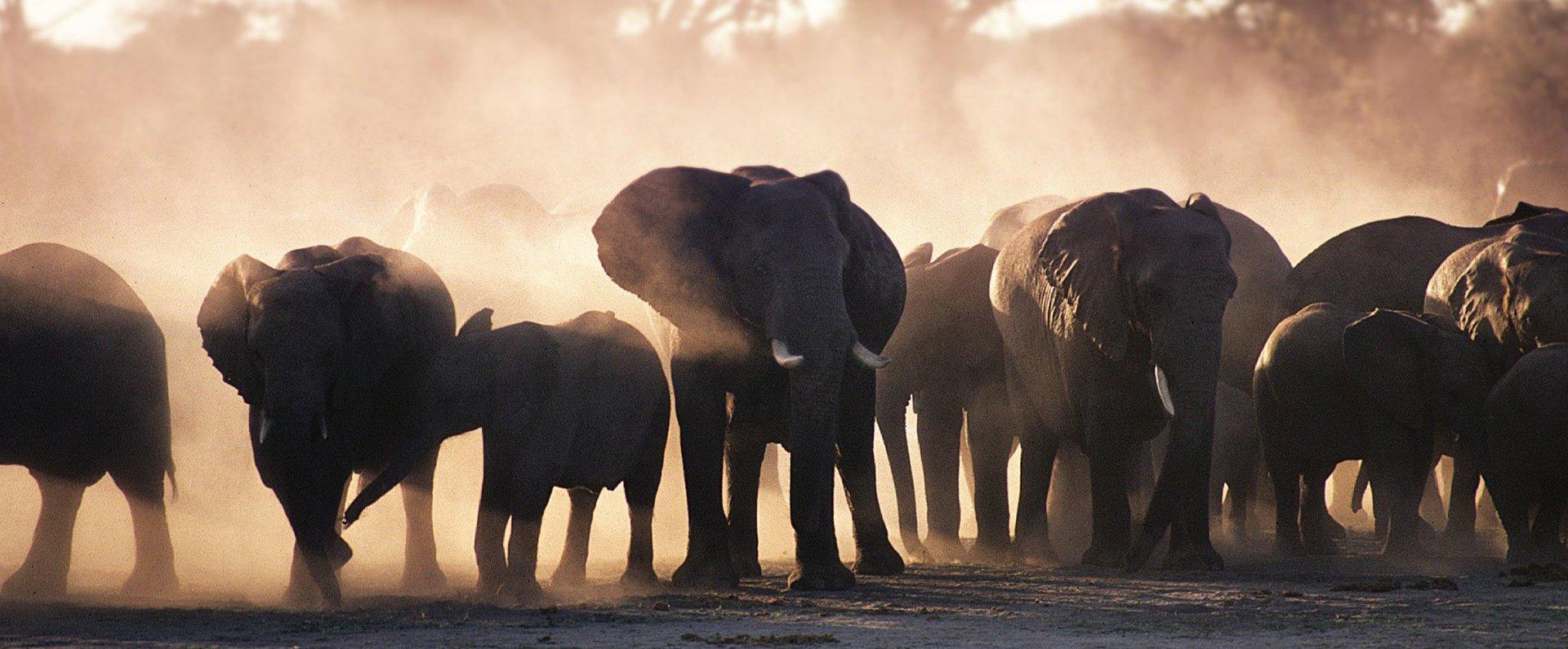 Victoria-Falls-Hotel-Elephant