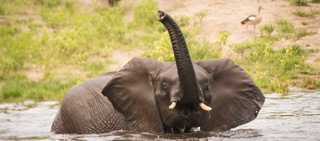 Victoria Falls Safari Lodge Elephant
